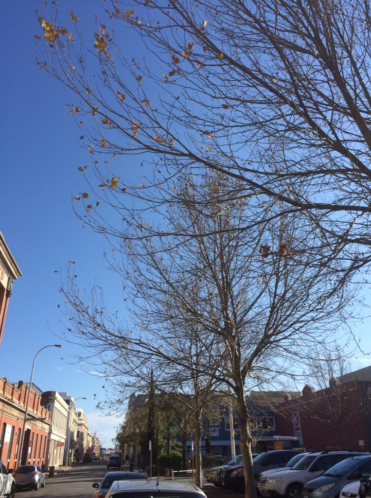 Pakenham St trees